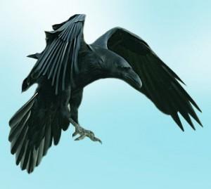 Сьогодні – 90 років від дня, коли чекісти вперше вирішили, що вбили легендарного Чорного Ворона. Та він повернувся…