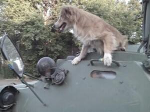 """У полку """"Азов"""" служить """"страшний звір"""", який вже став легендою – позивний """"Рижик"""""""