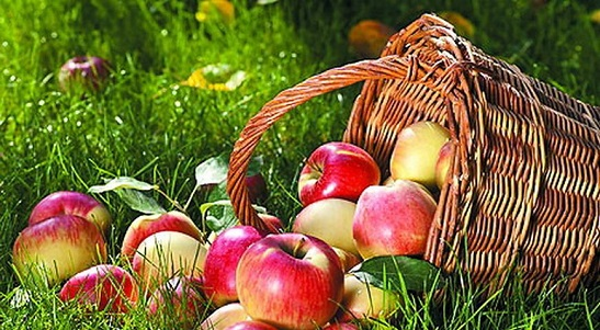 Яблучний Спас: що можна робити в цей день та прикмети свята