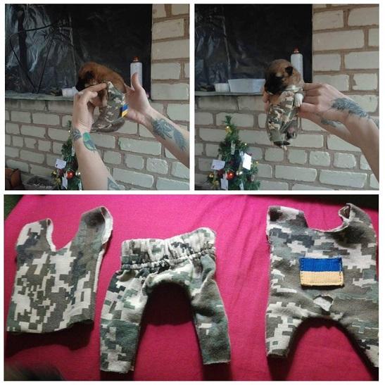 Маленьке цуценя, яке  просто на передовій вигодовує з піпетки українка-воїн, вже має власну… військову форму