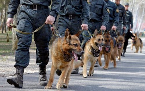 Нацгвардійці масово затримують на блокпостах бойовиків, які намагаються проникати з окупованих територій